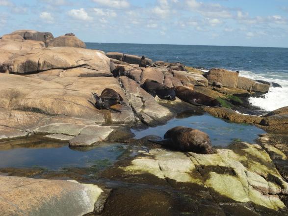 Leones marinos tomando sol en el cabo