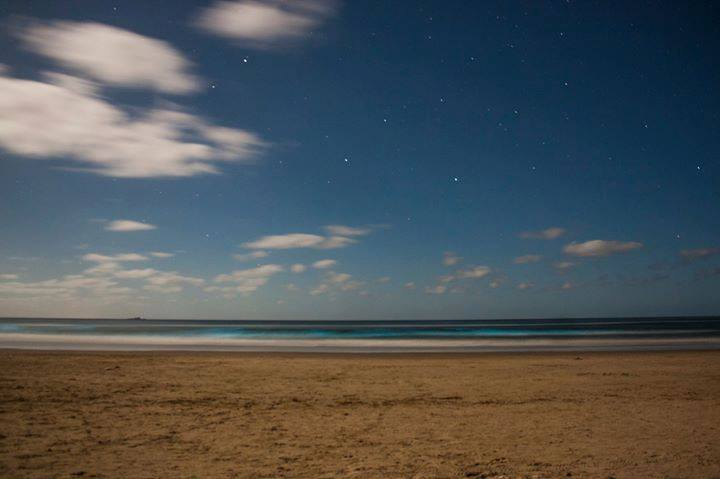 Noctilucas en Cabo Polonio. Foto de Magui Linn